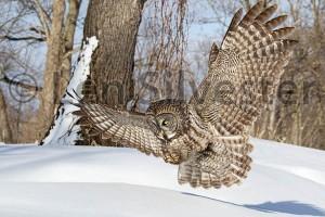 Owl 9089 by Len Silvester